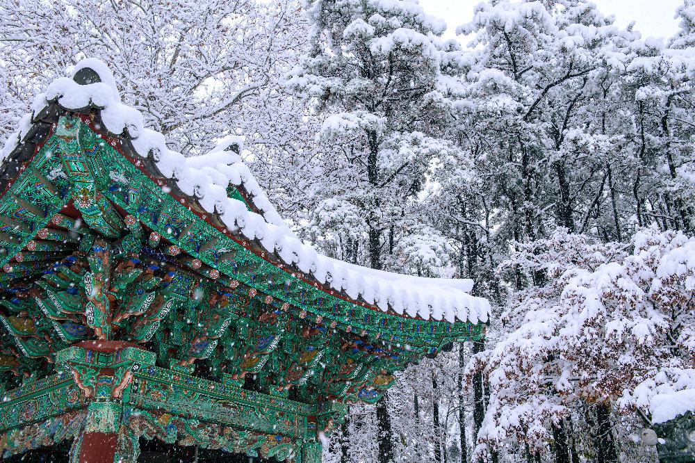 South Korea - winter